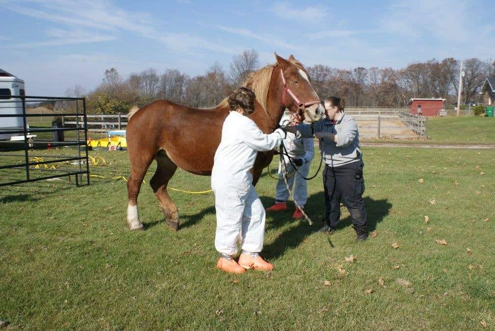 HazMat training with a live horse
